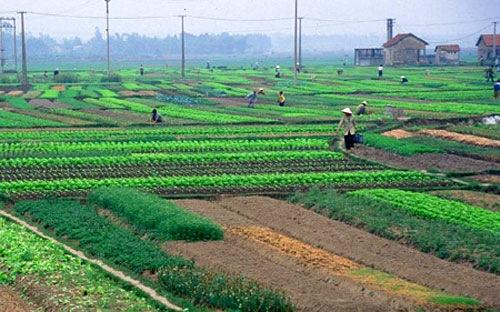 Hồ sơ chuyển mục đích sử dụng đất tại Quảng Ninh